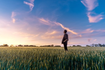 sky, wheat, field, man, agriculture, nature, grass, summer