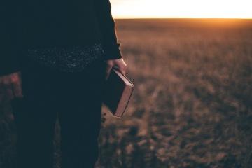 man, book, field, sunshine, dusk