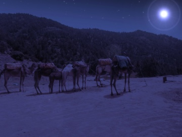 camel, animal, moonlight, night, landscape, desert