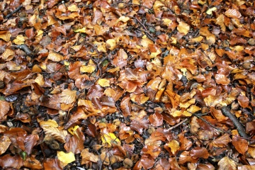 Nature, feuille, sol, automne, humide