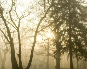 Brume, moring, brouillard, bois, aurore, arbre, paysage, soleil, nature
