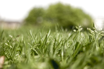 green grass, lawn, leaf, nature, flora, summer, field, herb, plant