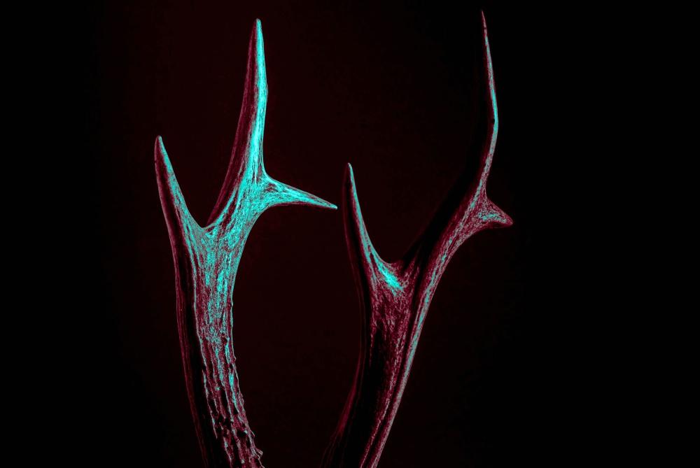 forma, corn de cerb, întuneric, corn, umbra