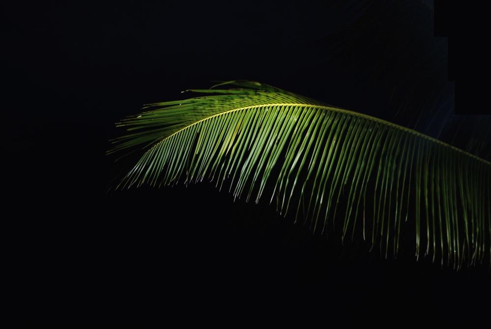 palm leaves, green leaf, darkness