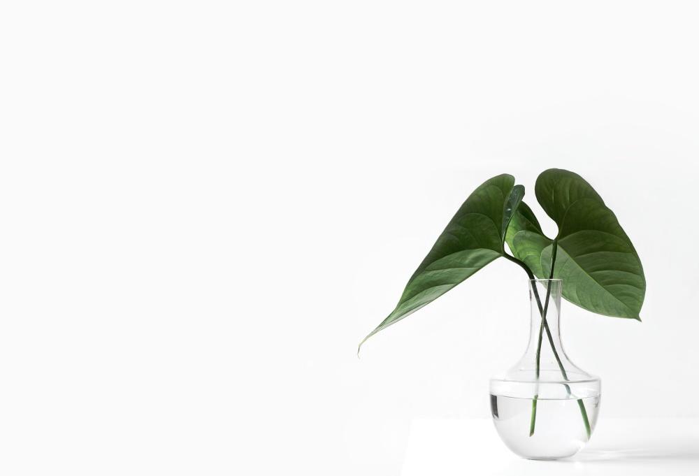 Feuille verte, vase, design minimal, flore, nature, écologie, plante