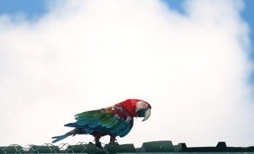 colorful parrot, bird, nature, lorikeet parrot, sky