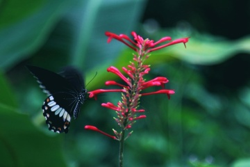 butterfly, nature, insect, flower, wildlife