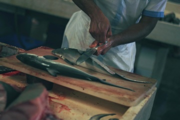 artisan, man, food, fish, production, industry, diet