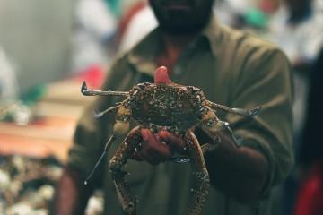nevertebrat, artropode, crab, supermarket, fructe de mare, produse alimentare, homar
