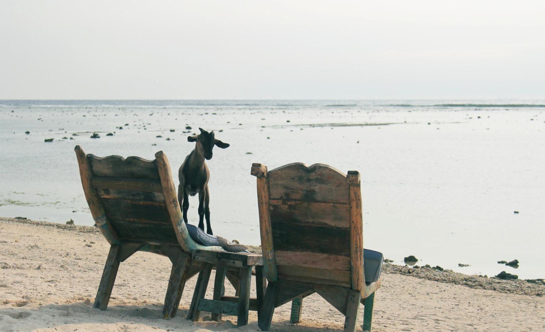 image libre ch vre animal mobilier plage chaise bord de mer eau mer si ge. Black Bedroom Furniture Sets. Home Design Ideas