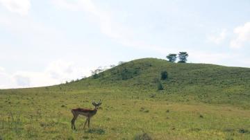 landscape, nature, hill, antelope, impala, deer