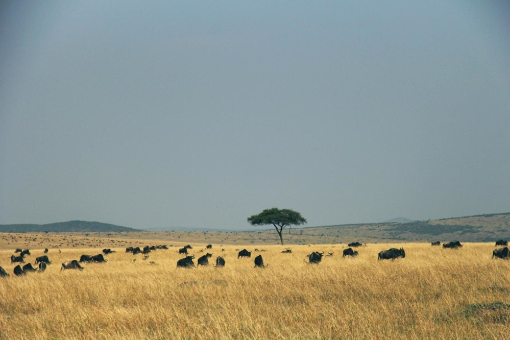 Africa, animal, landscape, land, field, grass