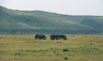 Rinoceronte, Africa, campo, animale, collina