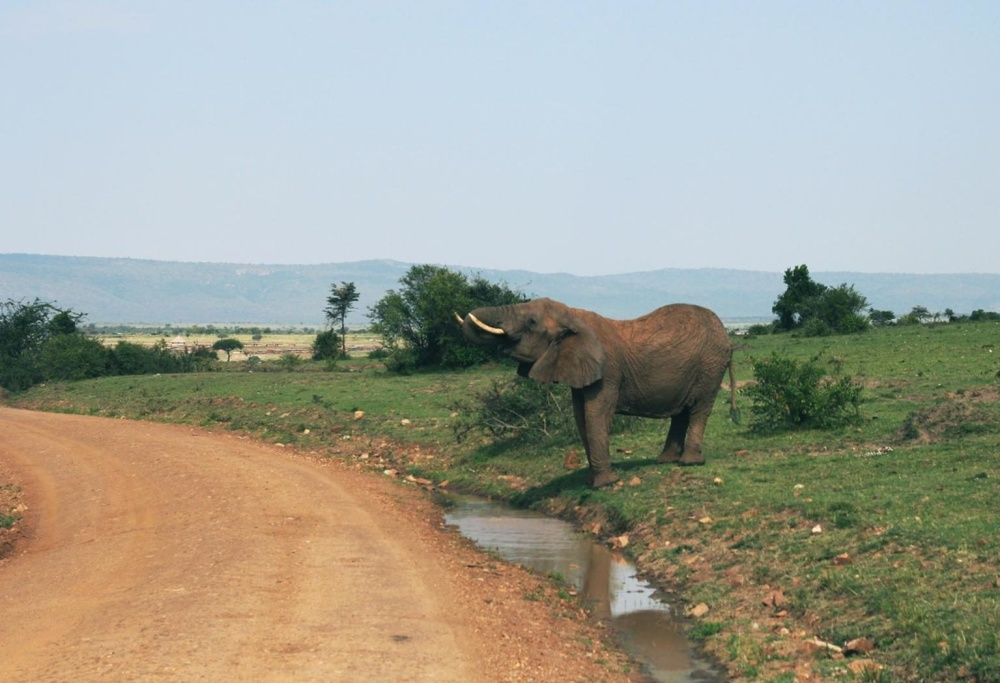 слон, дивите животни, трева, природа, пейзаж, вода, ливади, небе, Африка, животните