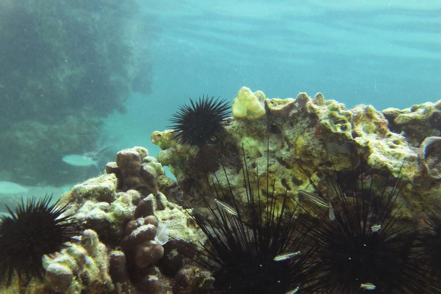 Free picture: underwater, ocean, reef, sea, water, coral, seascape, fish