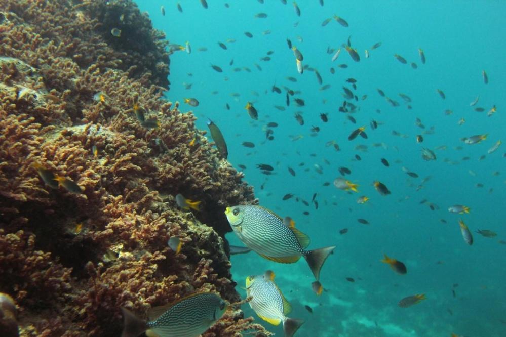 Kostenlose bild salzwasser unterwasser fische koralle for Salzwasser aquarium fische