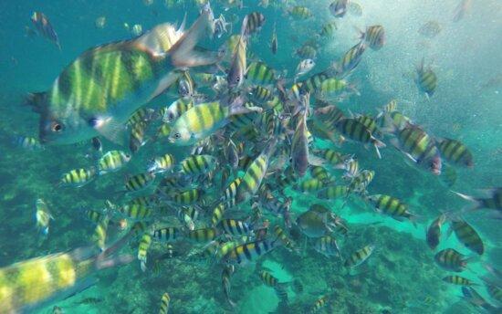 underwater, fish, coral, ocean, reef, water, sea, nature, marine