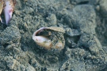 nature, sea, sand, animal, beach, invertebrate, mollusk