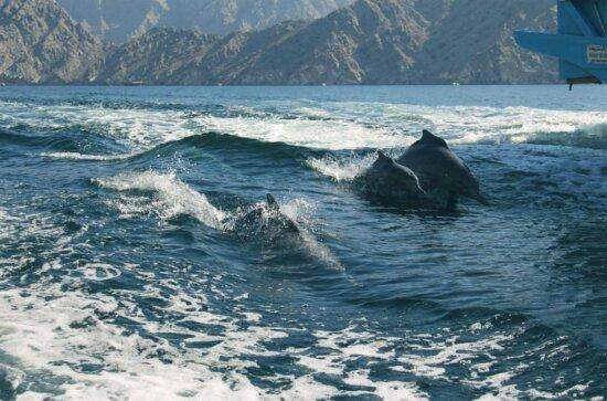 golphin, animal, water, ocean, sea