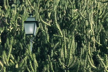 lamp, cactus, garden, tree, nature, leaf, flora