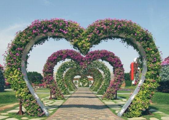 garden, heart, flower, leaf, nature, summer