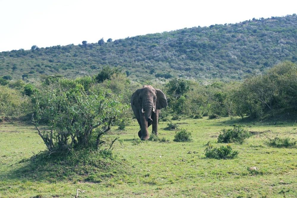 příroda, krajina, tráva, strom, louky a pastviny, slon, zvíře, Afrika