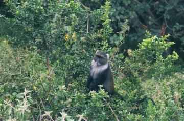 Nature, arbre, bois, singe, primate, babouin