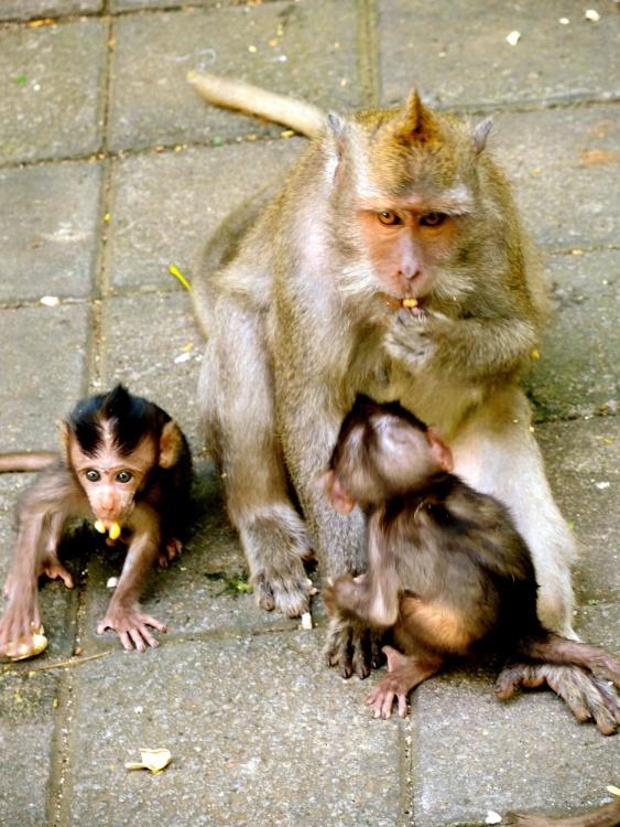 zvířata, volně žijící zvířata, roztomilý, příroda, opice