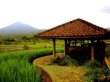 Casa, madera, campo, agricultura