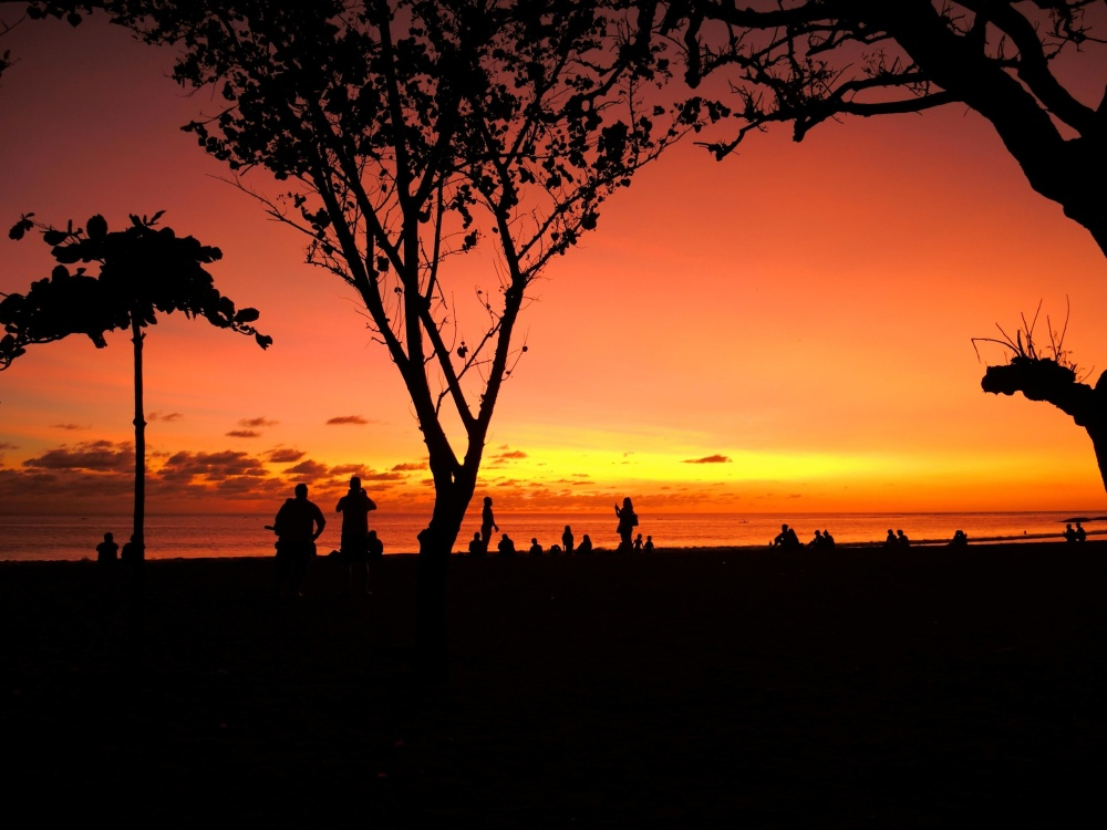 sunset, silhouette, dawn, backlit, sun, dusk, tree, landscape