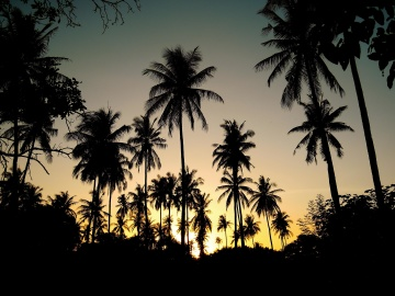 palm, beach, tree, sun, coconut, island, backlit, sunset