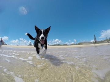 вода, плаж, пясък, небе, лято, море, куче, кучешки