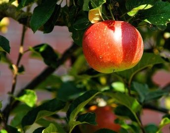 fruit, apple, food, leaf, garden, nature, orchard, delicious