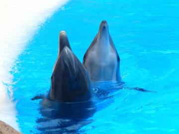 Eau, sous-marin, dauphin, animal, lumière du jour