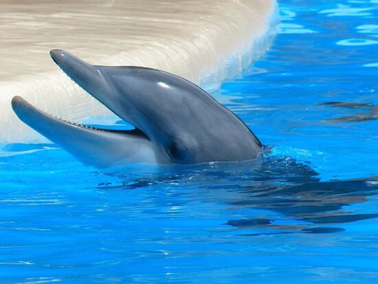 water, animal, swimming pool, dolphin, whale, underwater