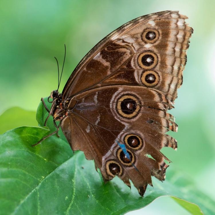 sommerfuglen, natur, insekter, dyr, dyreliv, møll, metamorphose