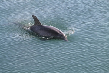 Eau, dauphin, faune, dauphin, océan, mer, nature, sous l'eau, lumière du jour
