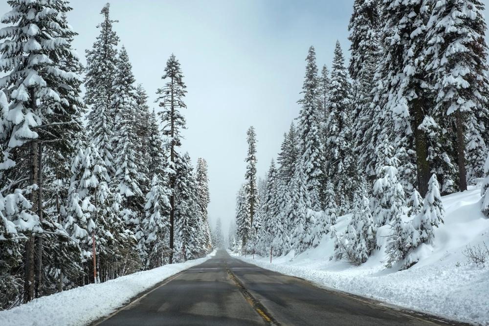 χιόνι, χειμώνα, παγετού, ψυχρού, ξύλο, πάγου, κατεψυγμένα, δέντρο, δάσος, τοπίο