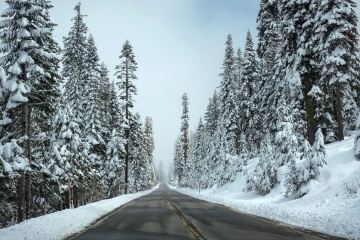 雪, 冬, 霜冻, 寒冷, 木材, 冰, 冰冻, 树木, 森林, 景观
