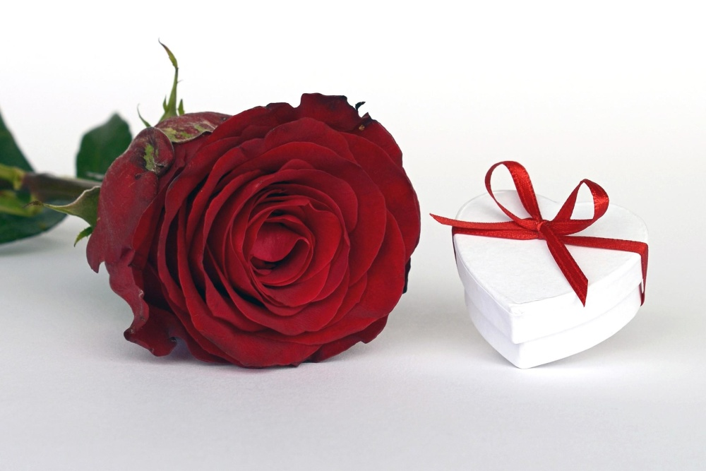 rose, flower, gift, romance, decoration, celebration, romance