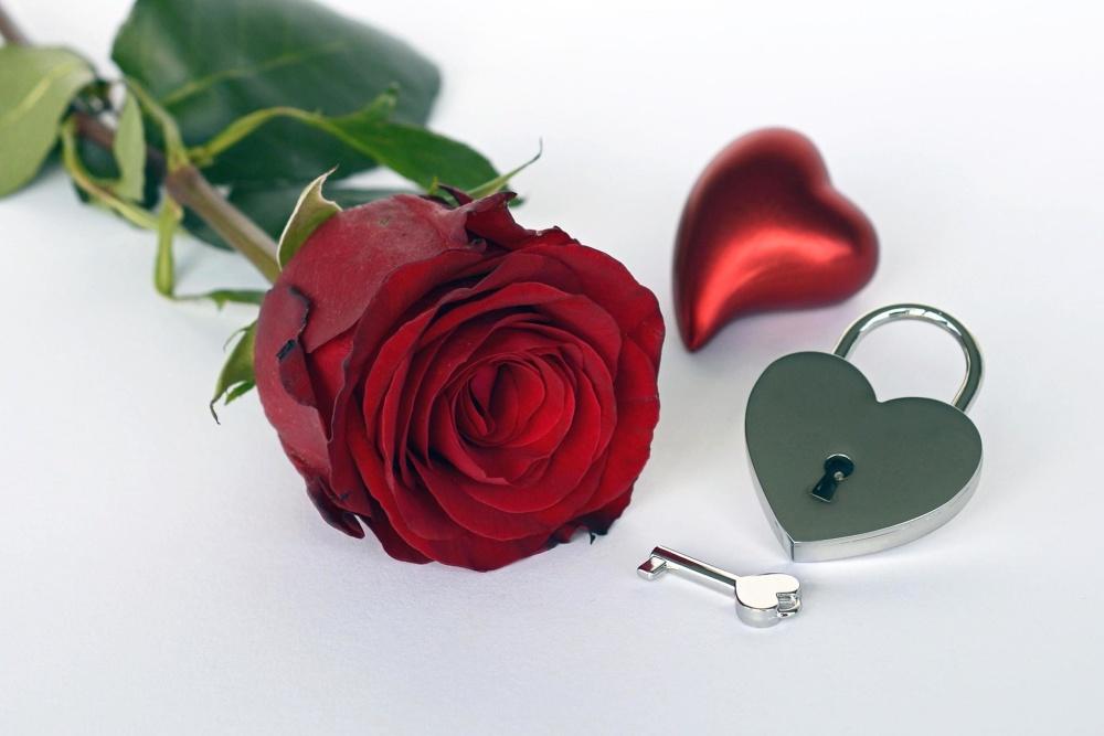romantikk, kjærlighet, rose, romantisk, blomst
