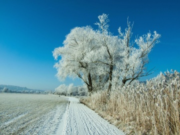 snow, winter, landscape, frost, tree, sky