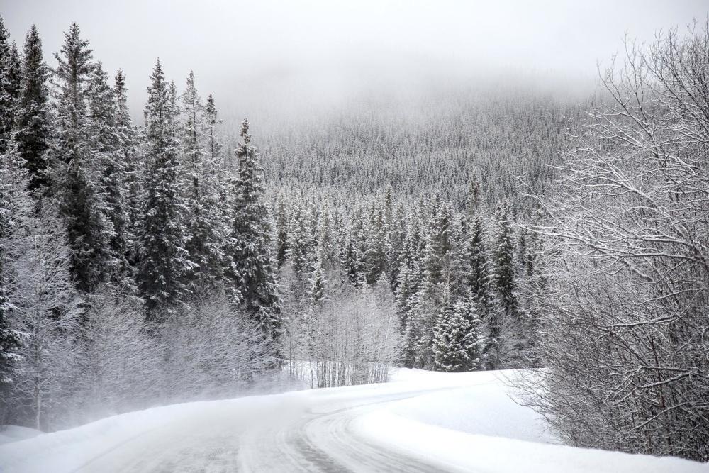 χιόνι, χειμώνα, ξύλο, κρύο, τον παγετό, δέντρο, τοπίο, κατεψυγμένα, πάγος