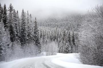 雪、冬、木、寒さ、霜、木、風景、凍結、氷