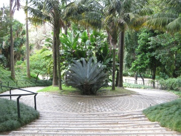garden, tree, palm, summer, flora, palm