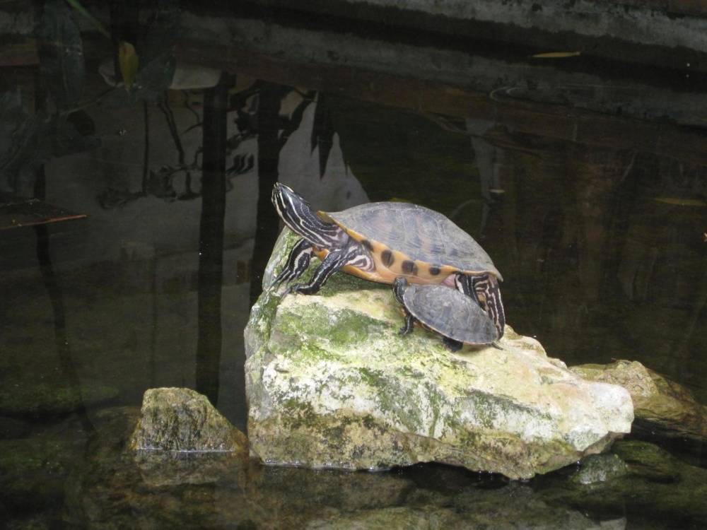 water, nature, turtle, reptile, wildlife, turtle, park, animal, stone, wild