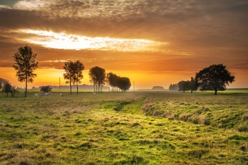 sunset, nature, landscape, dawn, sun, tree, grass, field, sky