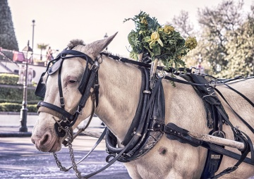 cavalry, carriage, street, urban, horse, tourism, tourist attraction