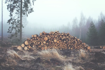 mist, firewood, tree, nature, wood, winter, landscape, pine tree, forest