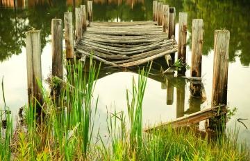 wood, wooden, grass, lake, nature, landscape, vegetation, summer